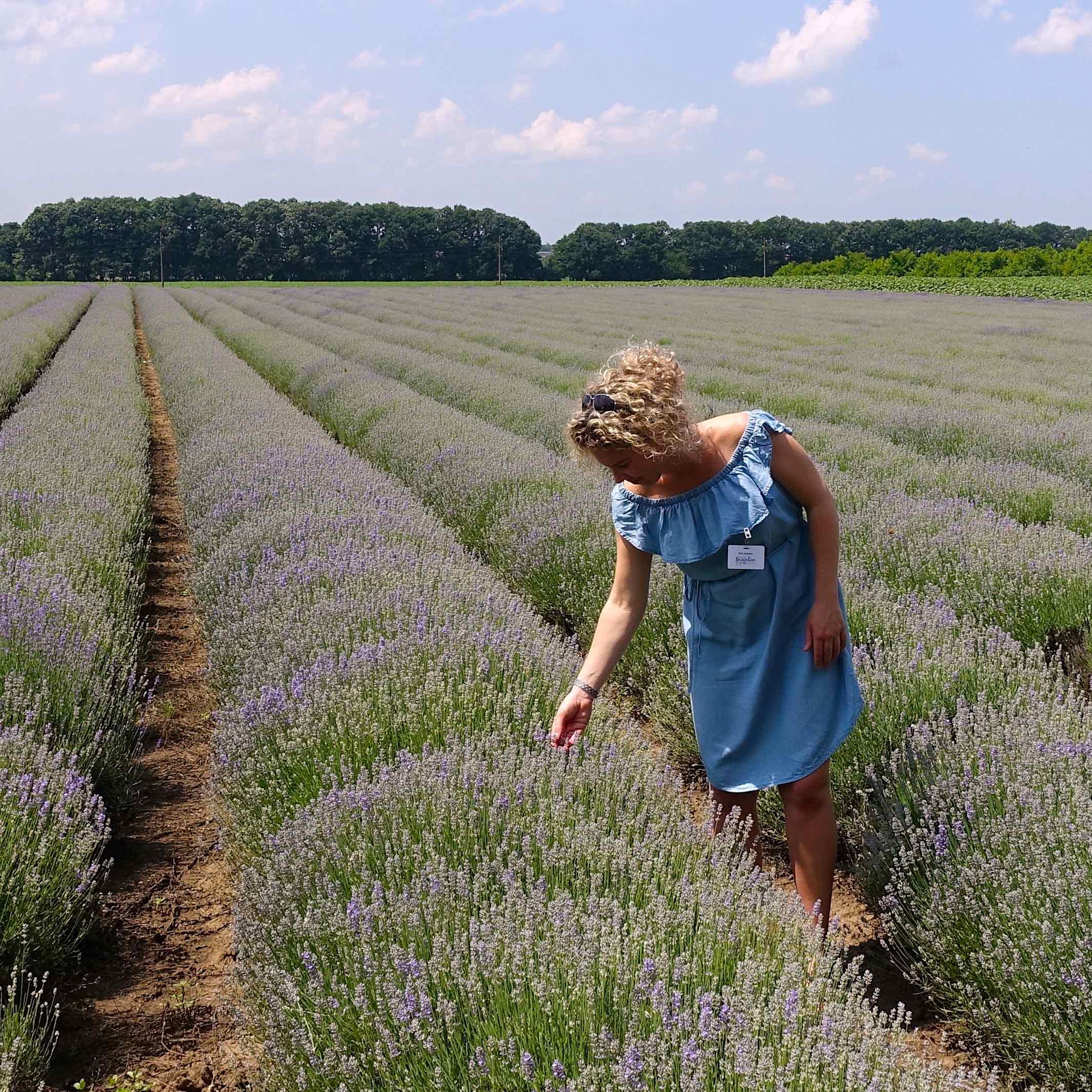 Km in lavendelveld bulgarije